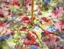 PhotoNo.3 パソッティ 傘 かさ レディース アンブレラ イタリア ローマ Style 189